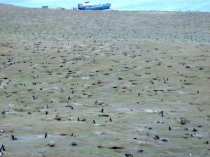 Oasi dell'Isola Magdalena con 250000 pinguini-Stretto di Magellano